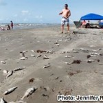 <u>MONDAY NEWS LINKS</u>: <p>Sudden Fish Kill in Galveston Raises Concerns About Low Oxygen Levels in the Gulf